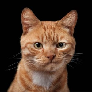 Gato Sarcástico
